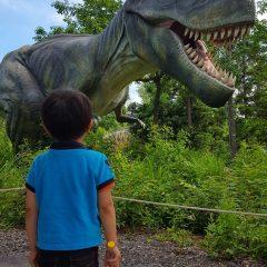 ティラノサウルスの歯の数を数えているよ!